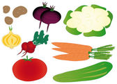 Set of colorful isolated vegetables — Stock Vector