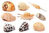 Seashells isolated on white — Stock Photo