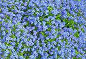 Flowers background — Fotografia Stock