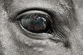Eye of The Horse — Stock Photo