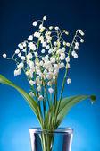 山谷的百合花 — 图库照片