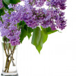 Syringa and glass - Stock Photo