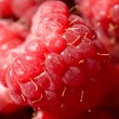 Ripe red raspberries — Stock Photo #8361667