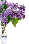 Syringa and glass — Stock Photo