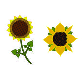Decorative drawing sunflowers — Stock Vector
