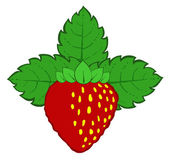 Painted strawberry with leaves — Stock Vector