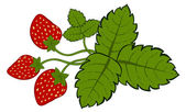 Painted strawberries with leaves — Stock Vector