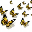 The butterflies of yellow color — Stock Photo