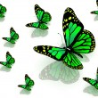 Butterflies of green color — Stock Photo #10426885