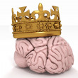 Brain with crown - Stock Photo