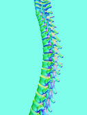 Backbone — Stock Photo