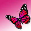 Butterfly on white background — Stock Photo #8420174
