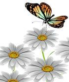 Papillon et daisy — Photo