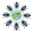 Beetles attacking the earth — Stock Photo