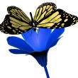 Butterfly en flower — Stockfoto
