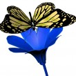 Butterfly en flower — Stockfoto #8960337