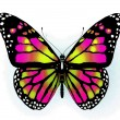 Butterfly — Stock Photo #8960364