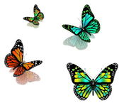 Butterflies on a white background — Stock Photo