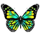 Geïsoleerde dagvlinder uit heldere kleur op een witte achtergrond — Stockfoto