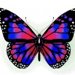 Butterfly — Stock Photo #9324302