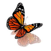 Isolated butterfly of orange color on a white background — Stock Photo