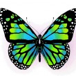 Butterfly — Stock Photo #9524516
