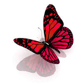 Isolated butterfly on a white background — Stock Photo