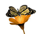 Butterfly and flower on white background — Stock Photo