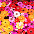 Stock Photo: Flowery Background