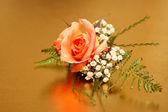 Miniature Rose — Stock Photo
