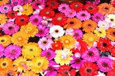 Sfondo fiorito — Foto Stock