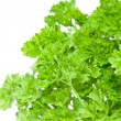 Water wetted Parsley — Stock Photo