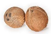 在白色背景上的两个椰子 — 图库照片