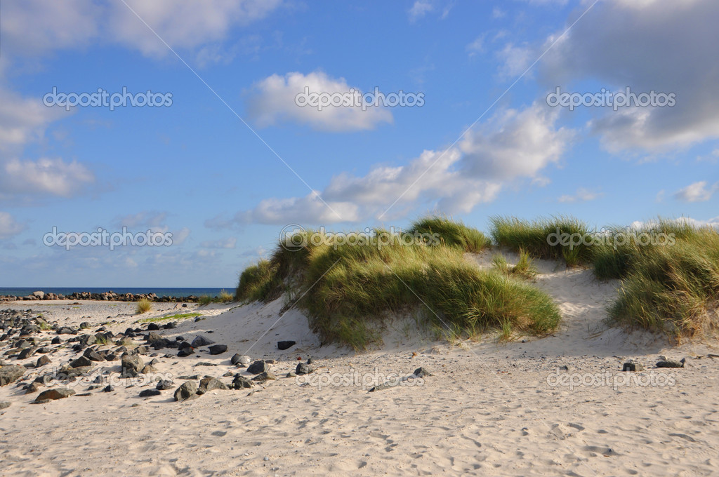 Dune with grass and the sea in the background  Stock Photo #8714386