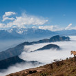 Stock Photo: Western Sichuan, China, Cattle Mountain cloud falls