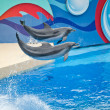 Dolphin show, Ocean Park — Stock Photo