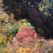 Sichuan, China, autumn leaves on the plateau — Stock Photo #10447836