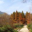 Stock Photo: Sichuan, China, autumn leaves on plateau