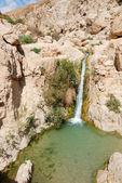 Ein gedi — Stock Photo