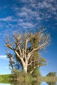 Singolo albero — Foto Stock