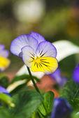 Flower — Stock fotografie