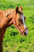 Koně na poli — Stock fotografie