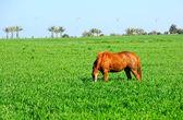 Paard op een veld — Stockfoto