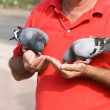 Stock Photo: Two doves