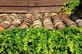 Tiles and leaves — Fotografia Stock