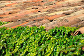 Leaves and old tiles — Stock Photo