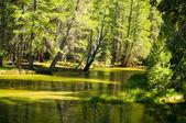 Robinson Creek — Stok fotoğraf