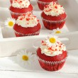 Stock Photo: Red velvet cupcakes