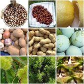 çeşitli meyve resimleri — Stok fotoğraf