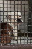 Hund bakom galler — Stockfoto